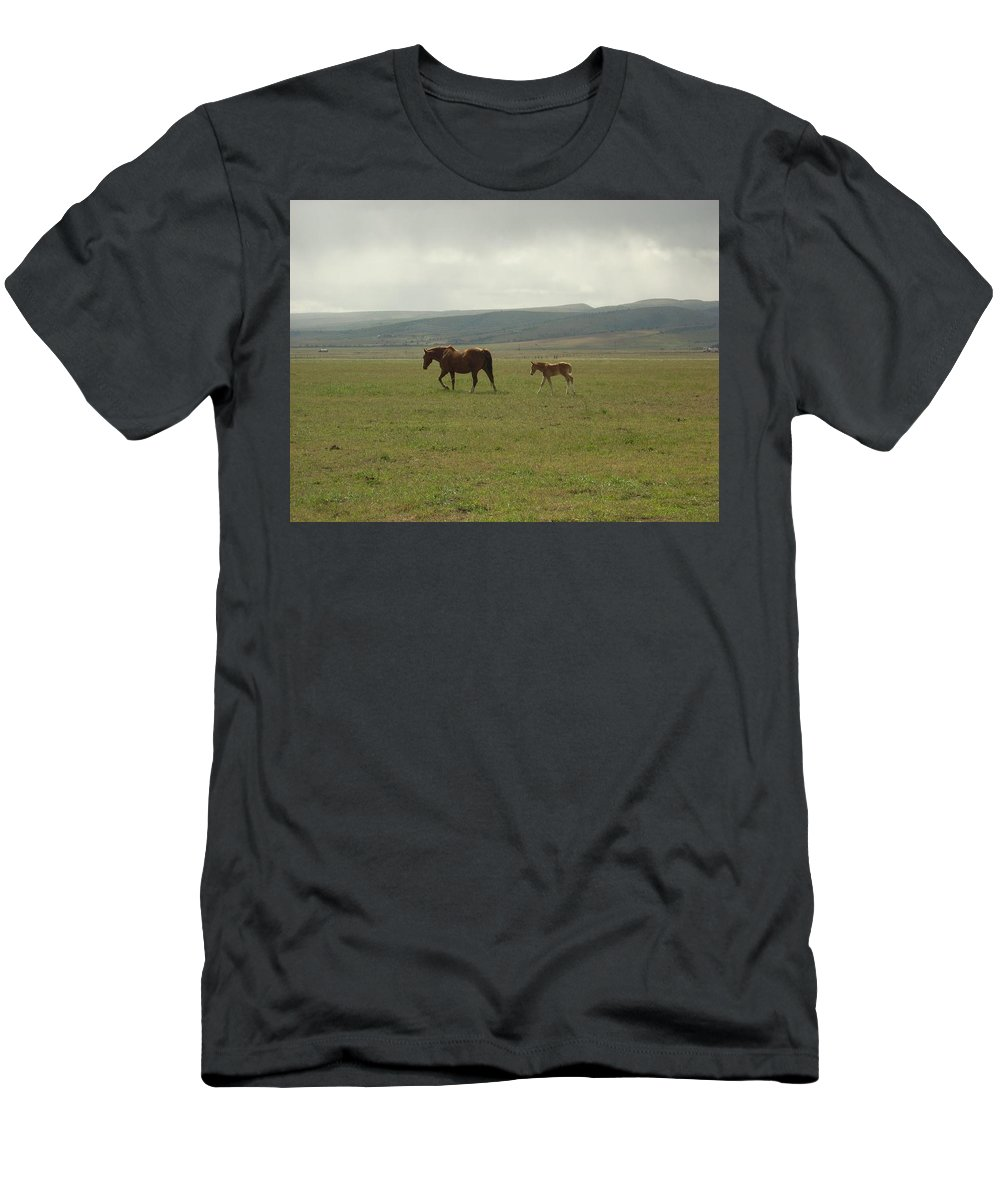 Colt T-Shirt featuring the photograph The Colt by Sara Stevenson
