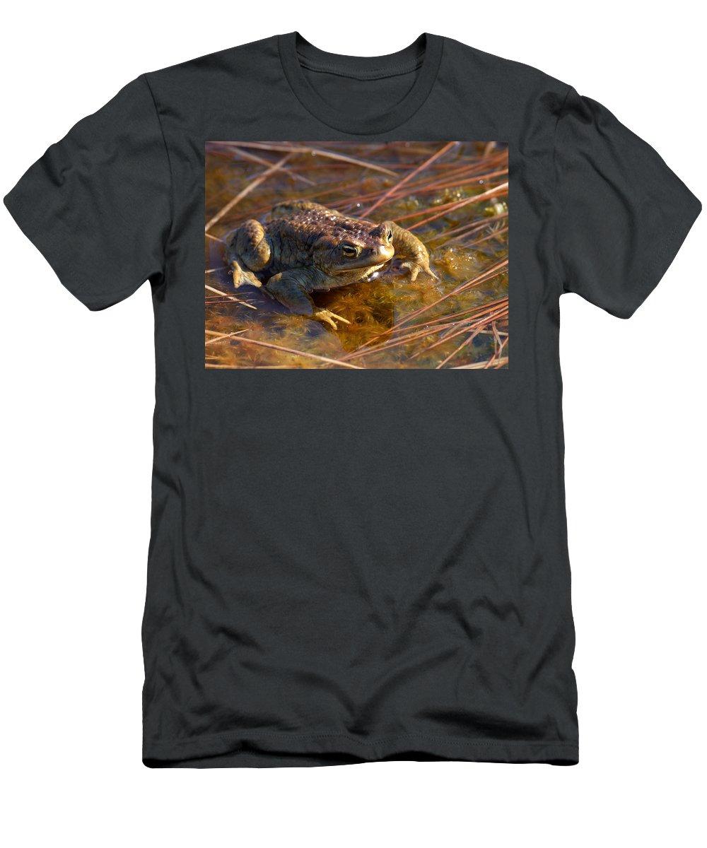 Lehtokukka Men's T-Shirt (Athletic Fit) featuring the photograph The Common Toad 1 by Jouko Lehto