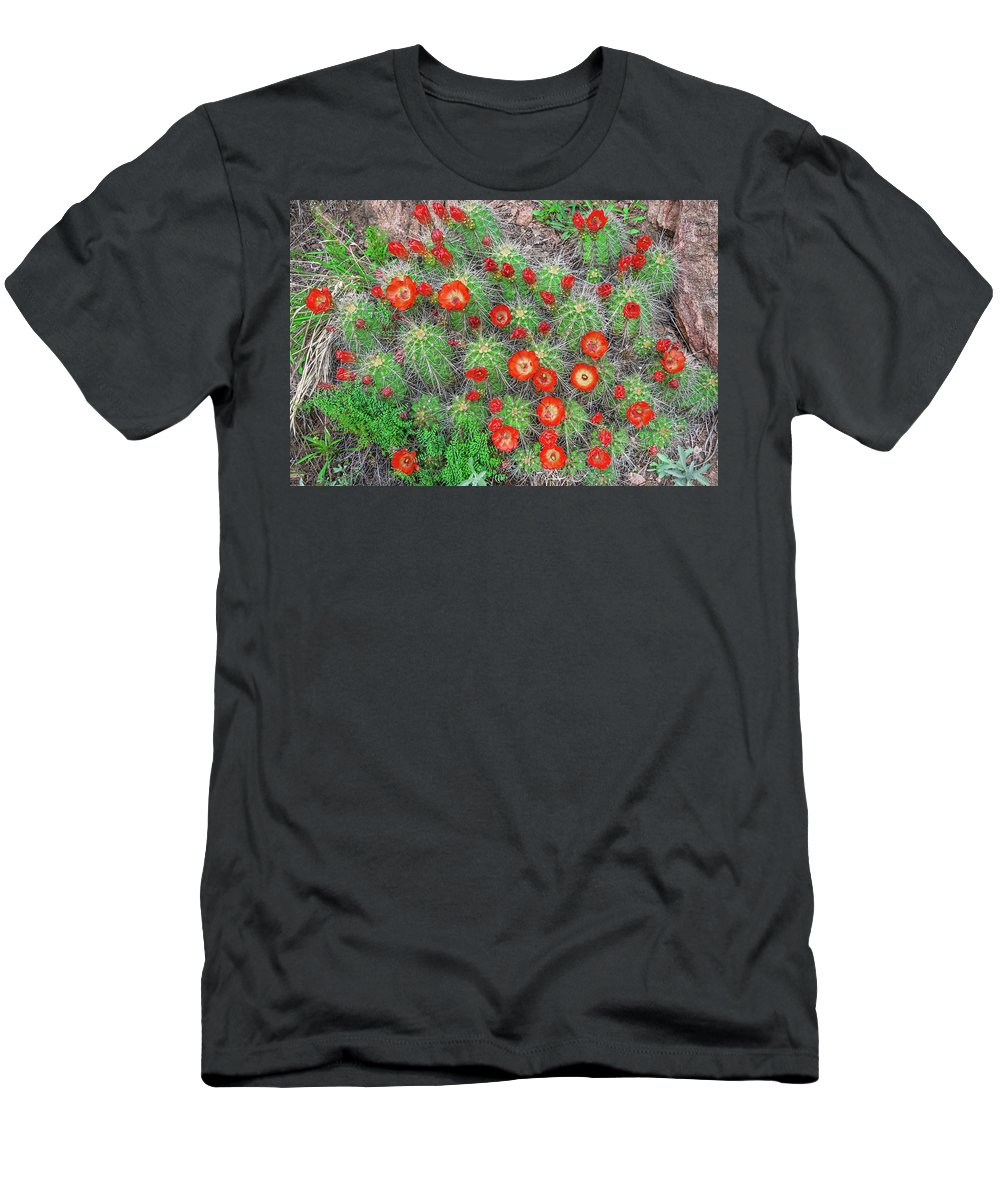 Claret Cup Cacti Men's T-Shirt (Athletic Fit) featuring the photograph The First Week Of May, Claret Cup Cacti Begin To Bloom Throughout The Colorado Rockies. by Bijan Pirnia