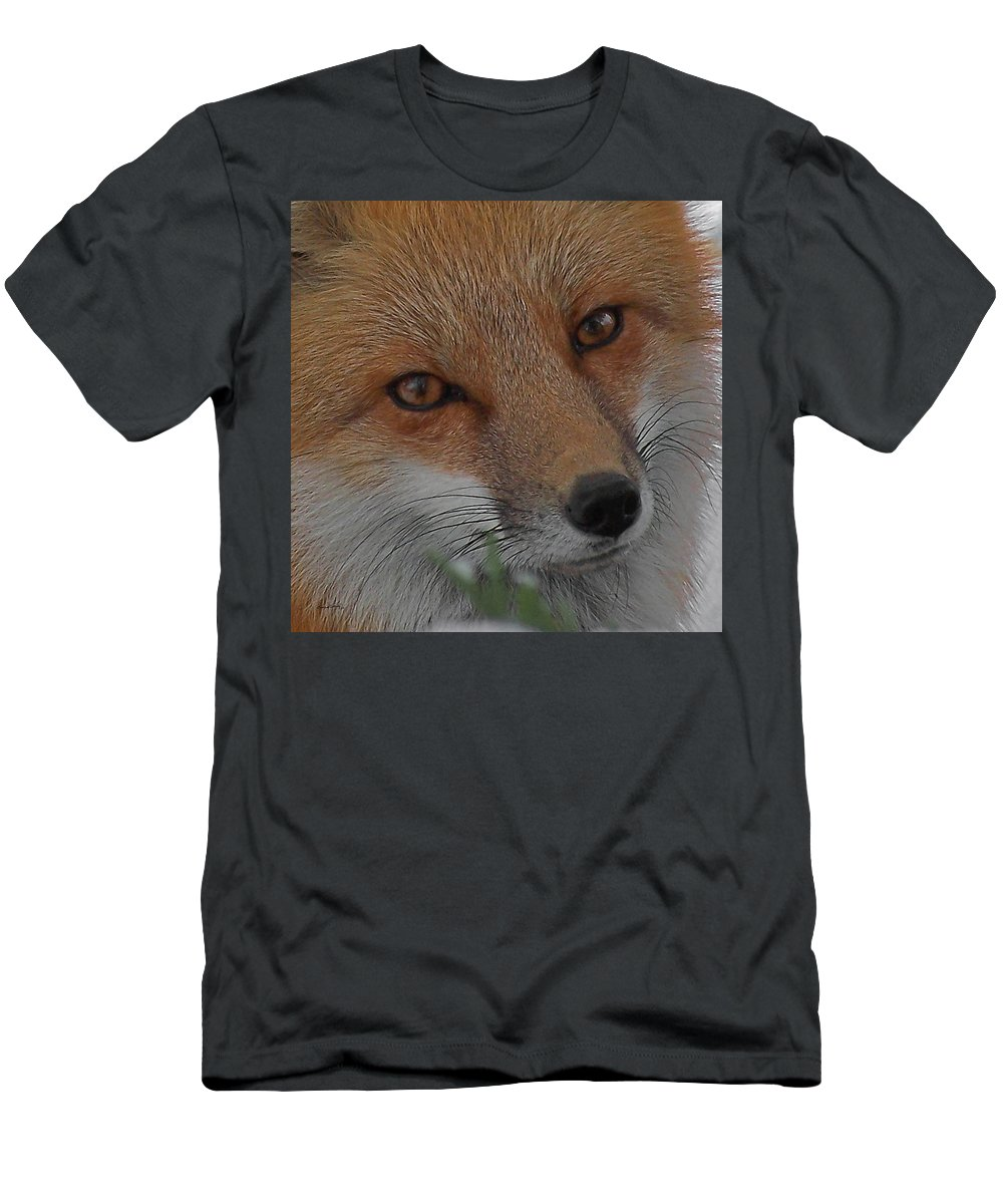Red Fox Men's T-Shirt (Athletic Fit) featuring the photograph The Fox 4 Upclose by Ernie Echols
