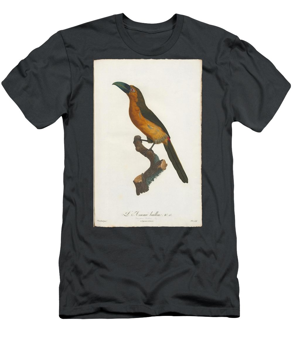 The Gag Aracari Men's T-Shirt (Athletic Fit) featuring the painting The Gag Aracari by MotionAge Designs