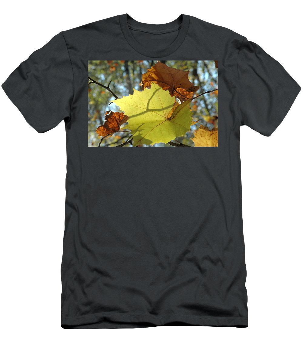 Leaves Men's T-Shirt (Athletic Fit) featuring the photograph The Light Plays by Trish Hale