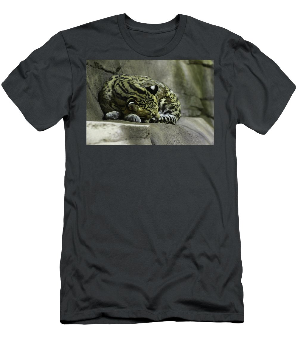 Cat Men's T-Shirt (Athletic Fit) featuring the photograph The Napping Rock by Laddie Halupa