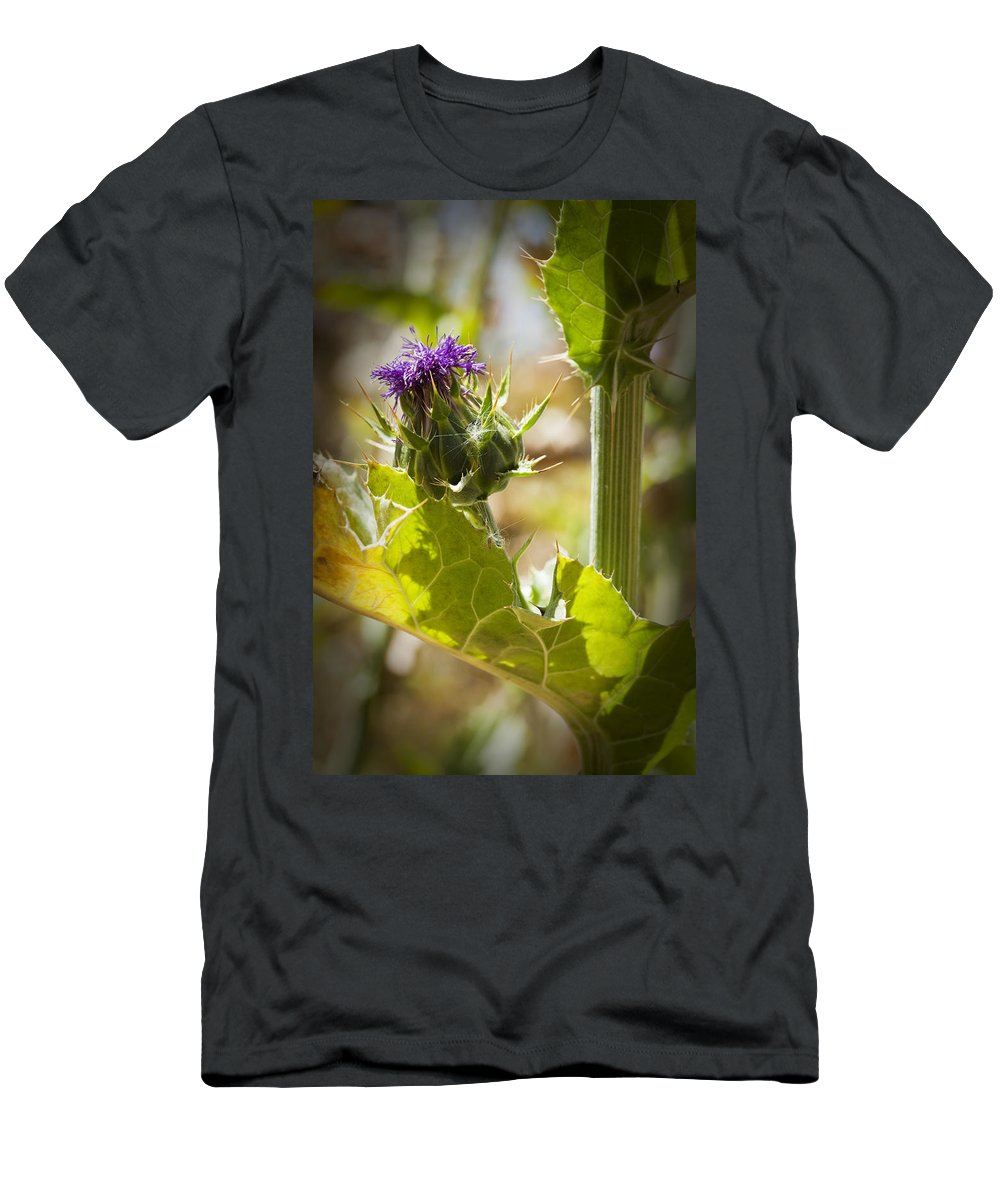 Thistle Men's T-Shirt (Athletic Fit) featuring the photograph Thistle 2 by Kelley King