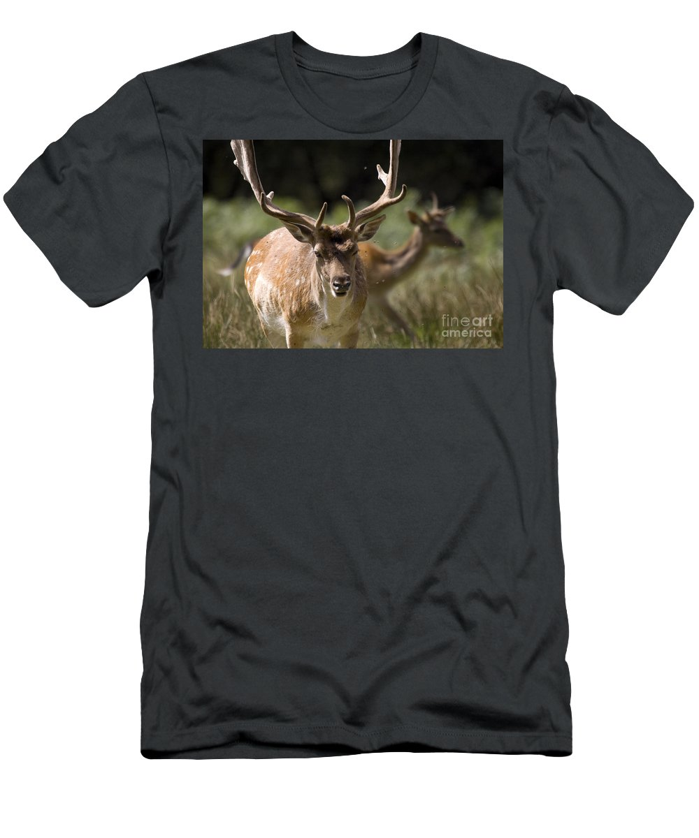 Fallow Deer Men's T-Shirt (Athletic Fit) featuring the photograph Those Bloody Flies by Angel Ciesniarska