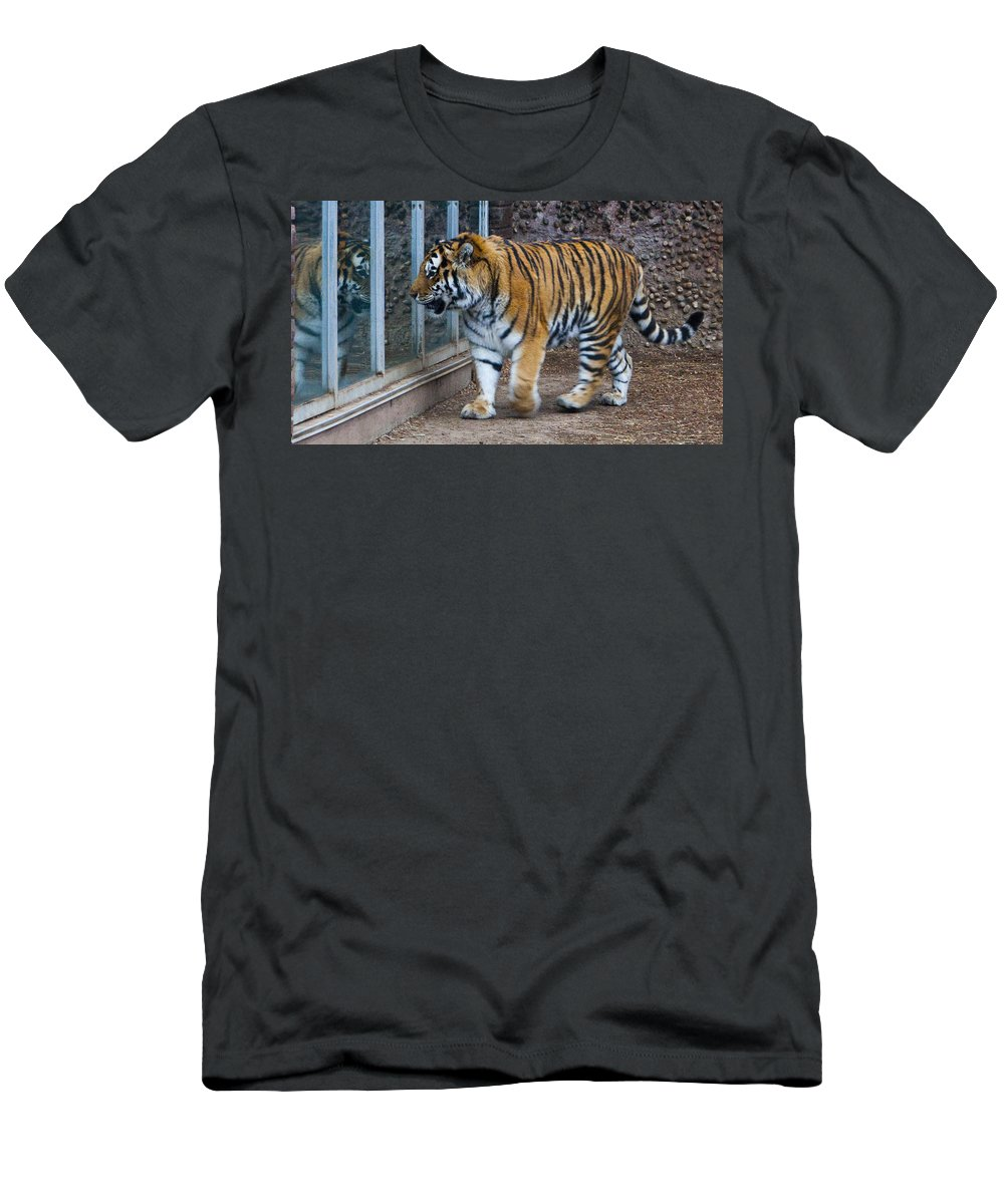 Tiger Men's T-Shirt (Athletic Fit) featuring the photograph Tiger Territory 4 by Angus Hooper Iii