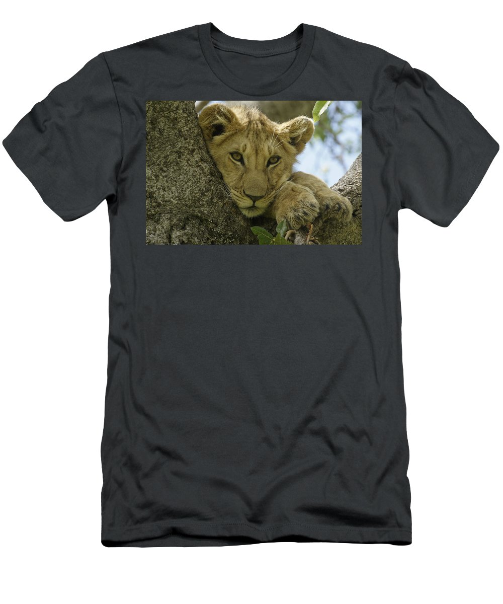 Africa T-Shirt featuring the photograph Time for a Nap by Michele Burgess