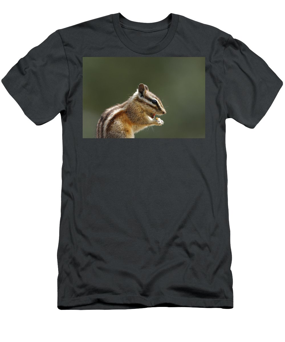 Squirrel Men's T-Shirt (Athletic Fit) featuring the photograph Tongue In Cheek by Donna Blackhall