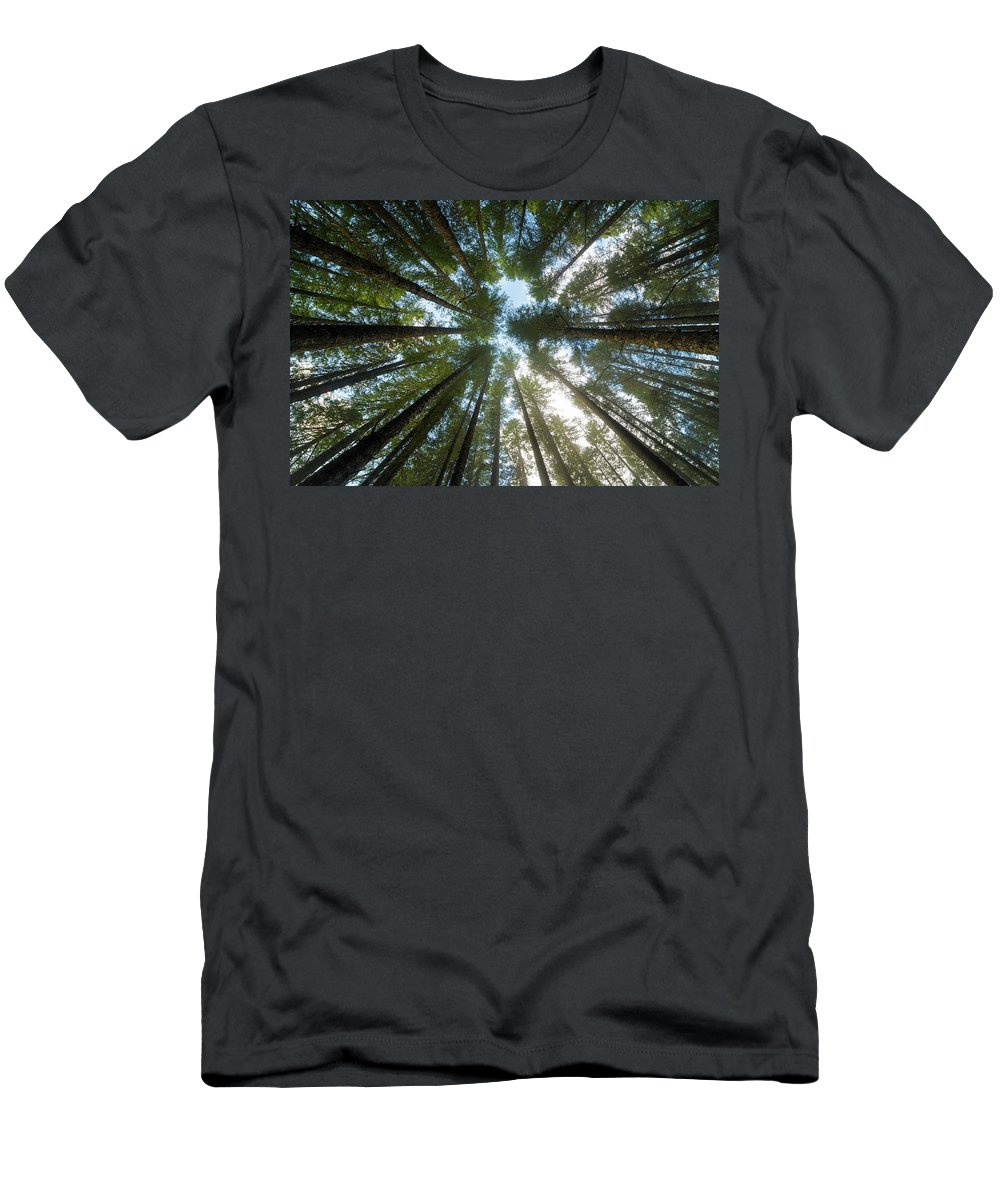 Fir Men's T-Shirt (Athletic Fit) featuring the photograph Towering Fir Trees In Oregon Forest State Park by David Gn