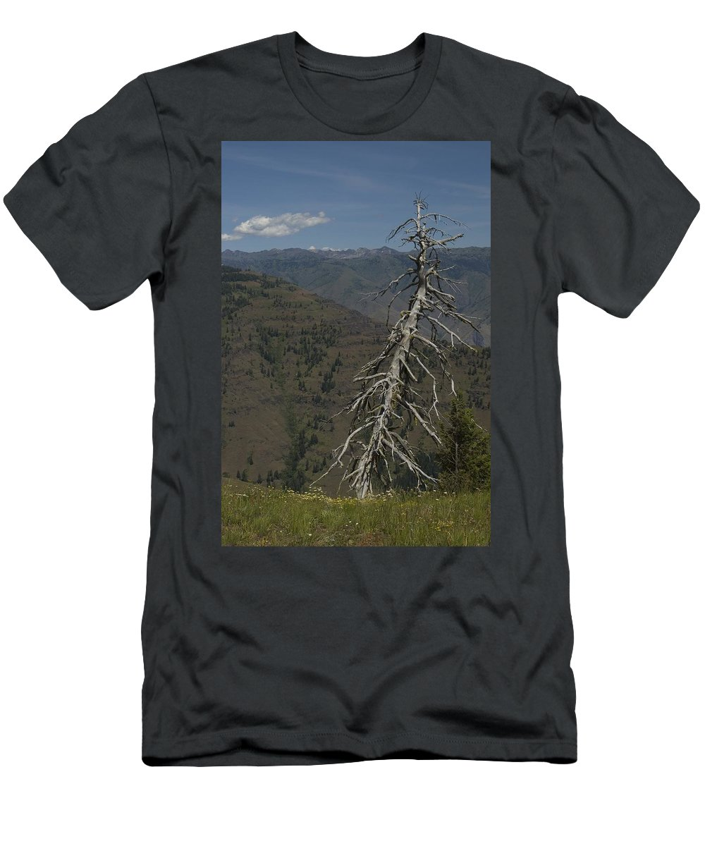 Tree Men's T-Shirt (Athletic Fit) featuring the photograph Tree Look Out by Sara Stevenson