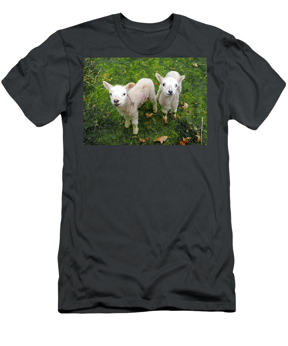 Lamb Men's T-Shirt (Athletic Fit) featuring the mixed media Twins - Spring Lambs by P Donovan