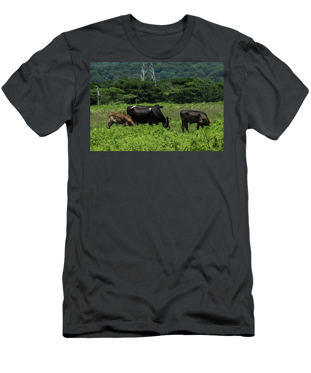 Cows Men's T-Shirt (Athletic Fit) featuring the photograph Vacas De Ahuachapan 2 by Totto Ponce