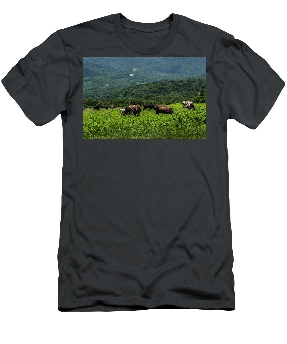 Cows Men's T-Shirt (Athletic Fit) featuring the photograph Vacas De Ahuachapan by Totto Ponce