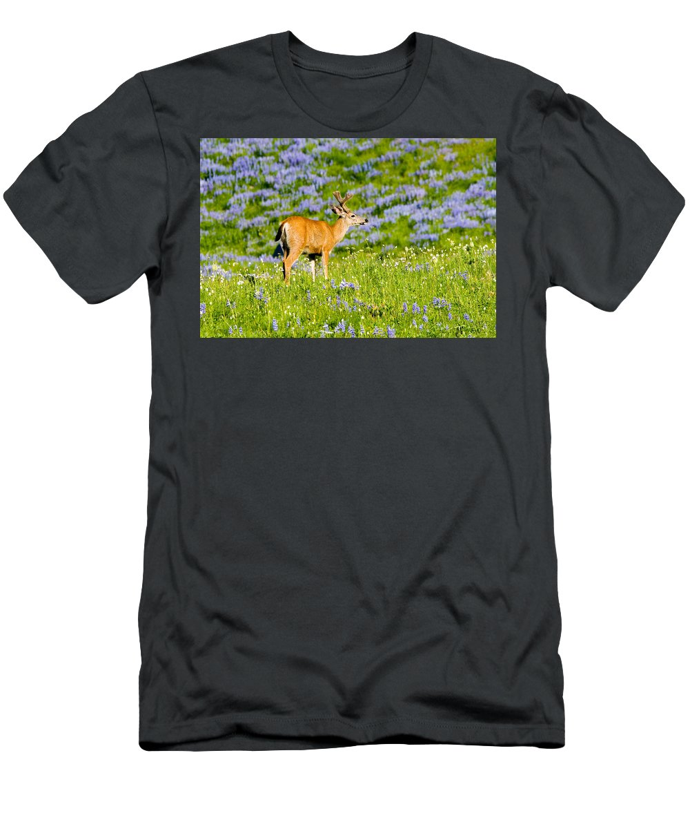 Deer T-Shirt featuring the photograph Velvet on Lupine by Mike Dawson