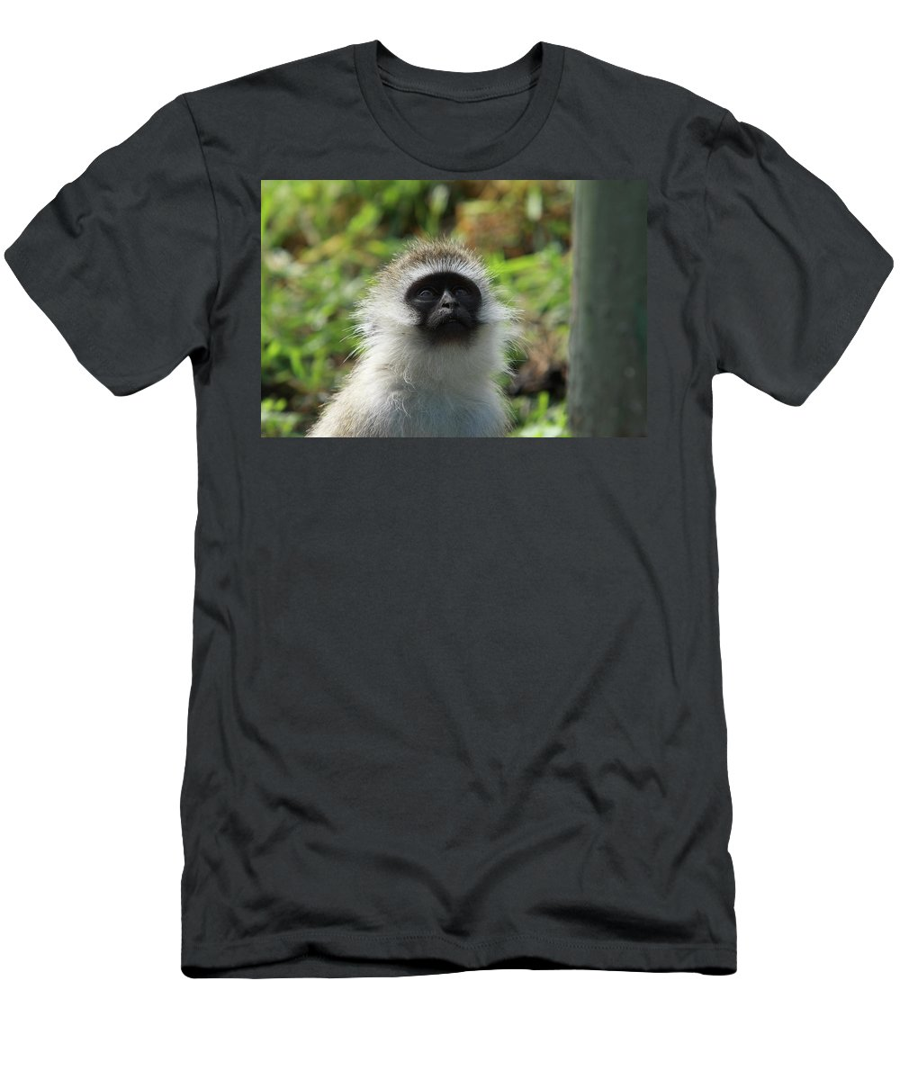 Vervet Monkey Men's T-Shirt (Athletic Fit) featuring the photograph Vervet Monkey by Aidan Moran