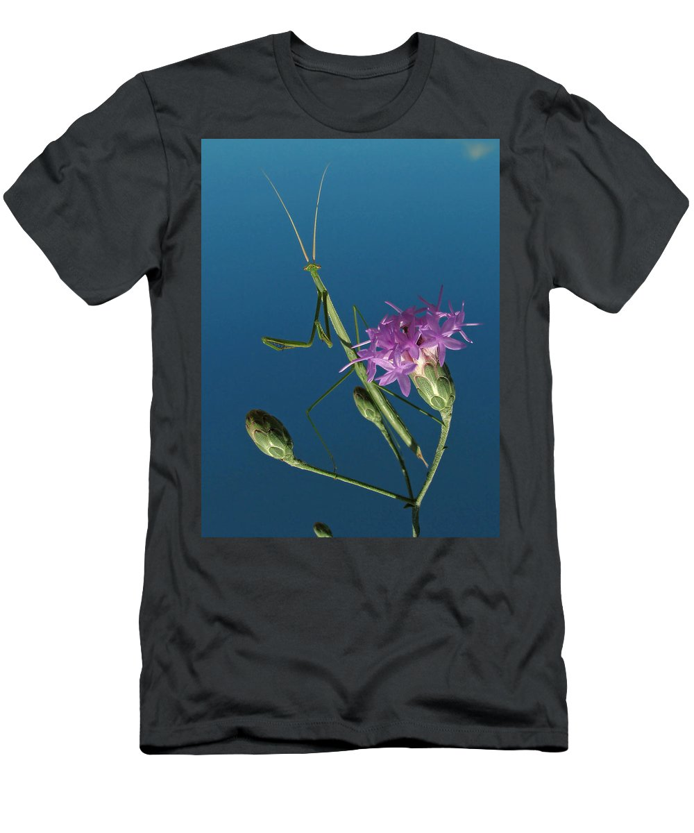 Nature Men's T-Shirt (Athletic Fit) featuring the photograph Walkingstick by Peg Urban