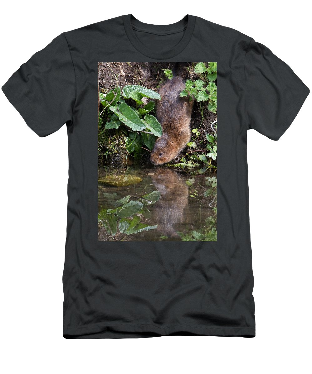 Water Vole Men's T-Shirt (Athletic Fit) featuring the photograph Water Vole by Bob Kemp