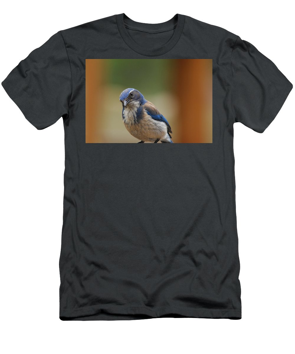 Mountain Blue Bird Men's T-Shirt (Athletic Fit) featuring the photograph Well Hello Beautiful by Donna Blackhall
