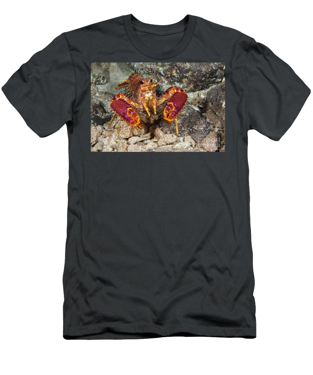 Animal Art Men's T-Shirt (Athletic Fit) featuring the photograph Western Lobster by Dave Fleetham - Printscapes
