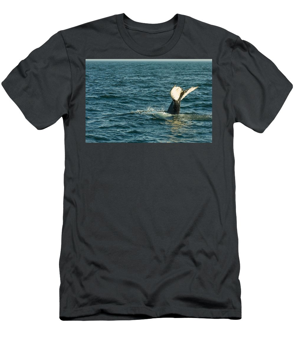 Whale Men's T-Shirt (Athletic Fit) featuring the photograph Whale by Sebastian Musial