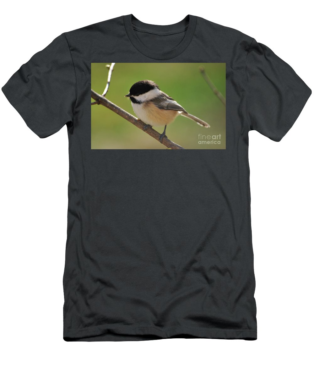 Chickadee Men's T-Shirt (Athletic Fit) featuring the photograph What To Do What To Do by Lori Tambakis