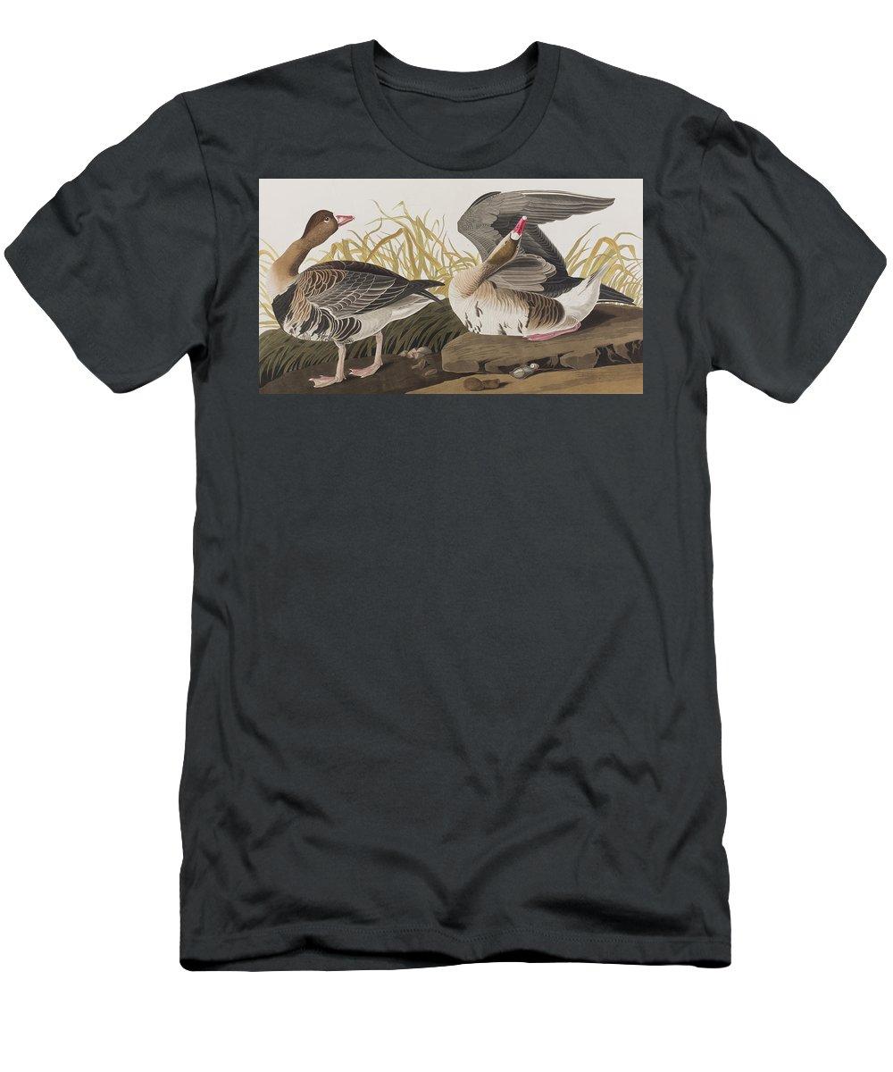 White Fronted Goose Men's T-Shirt (Athletic Fit) featuring the painting White-fronted Goose by John James Audubon