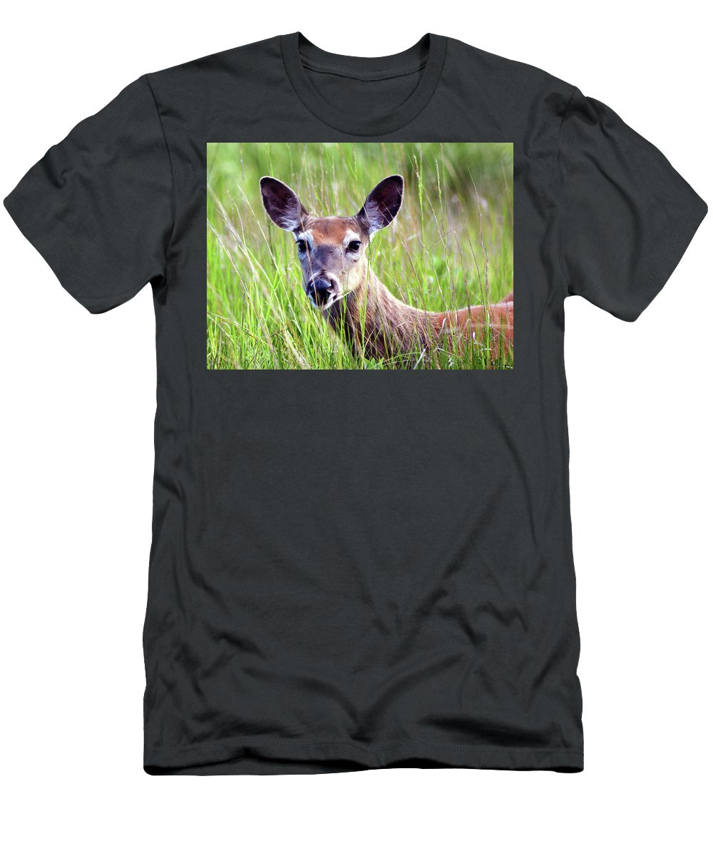 White Tail Deer Men's T-Shirt (Athletic Fit) featuring the pyrography White Tail Doe by Sally Sperry