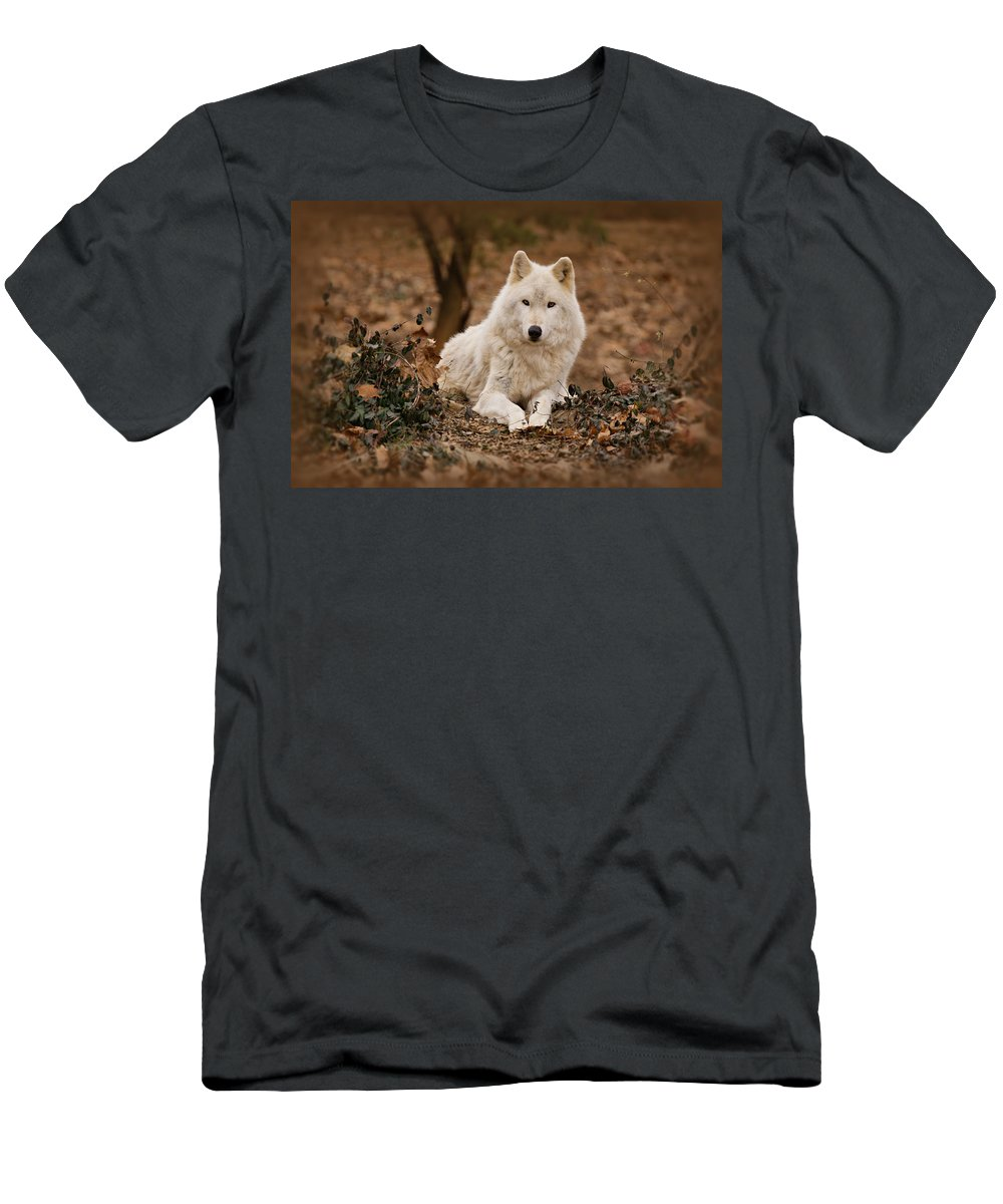 Wolf Men's T-Shirt (Athletic Fit) featuring the photograph White Wolf by Sandy Keeton