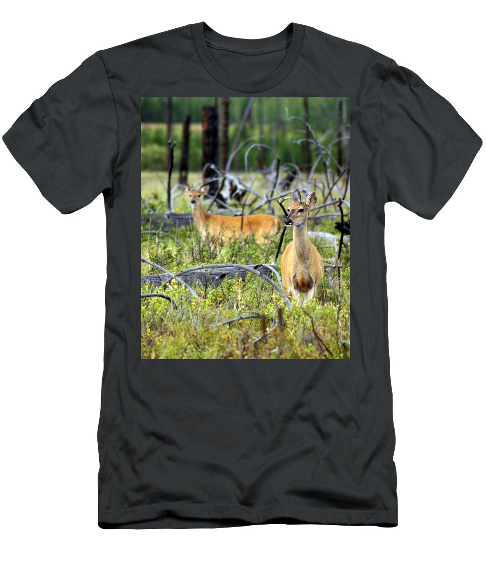 Deer Men's T-Shirt (Athletic Fit) featuring the photograph Whitetails by Marty Koch