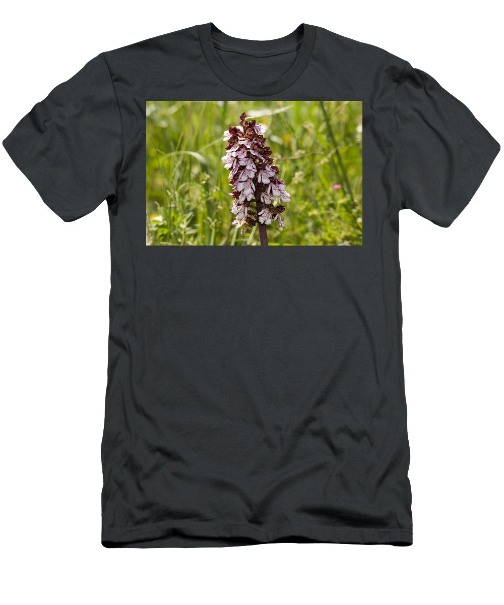 Wild Orchid In Meadow Men's T-Shirt (Athletic Fit) featuring the photograph Wild Orchid In Meadow by Cliff Norton