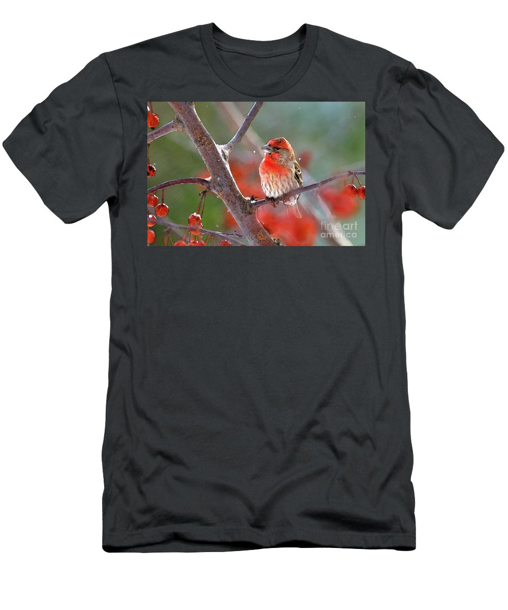 House Finch; House Finches; Carpodacus Mexicanus; Finch; Finches; Songbird; Songbirds; Bird; Birds; Avian; Ornithology; Animal; Animal; Wildlife; Nature;art Men's T-Shirt (Athletic Fit) featuring the photograph Winter Red by Betty LaRue