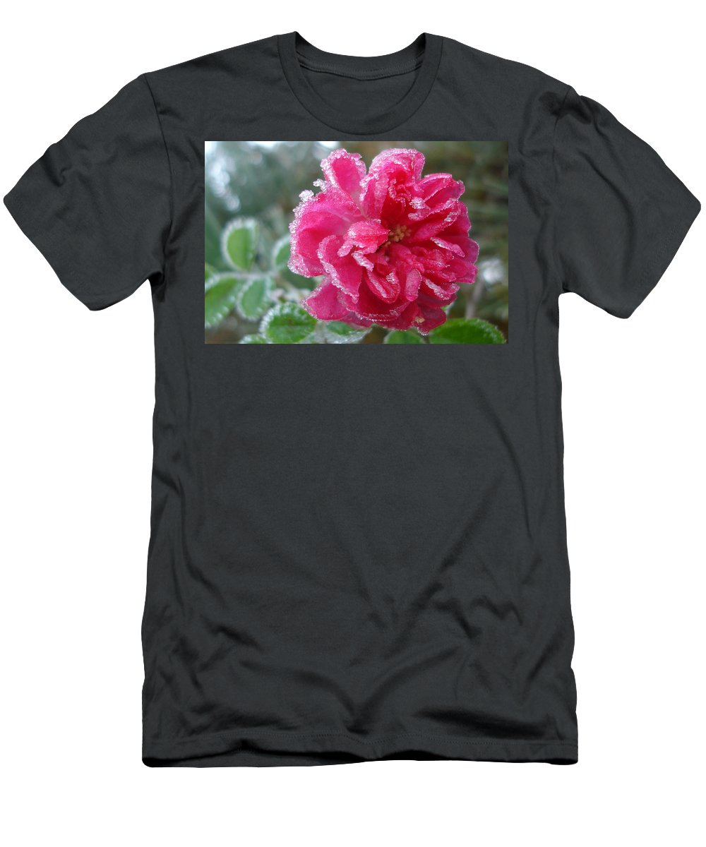 Rose Men's T-Shirt (Athletic Fit) featuring the photograph Winter Rose by Susan Baker