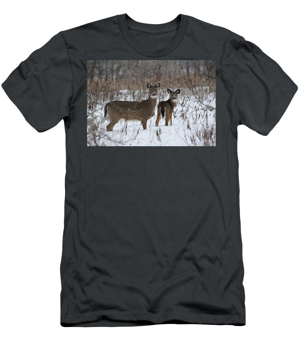 Deer Men's T-Shirt (Athletic Fit) featuring the photograph Winter Wonderland by Lori Tordsen