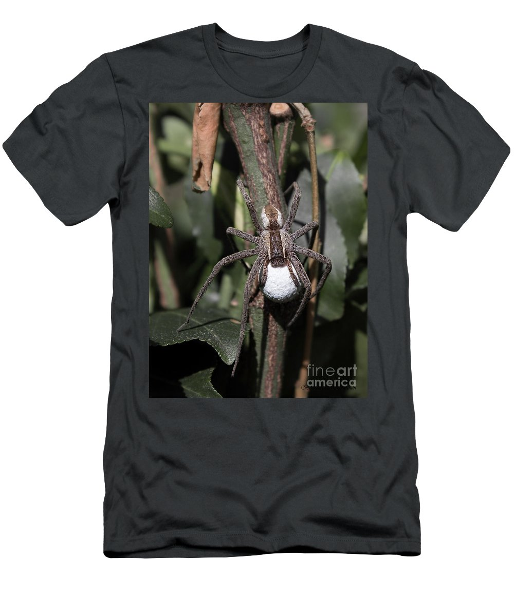 Wolf Spider Men's T-Shirt (Athletic Fit) featuring the photograph Wolf Spider With Egg Sac by Barbara McMahon