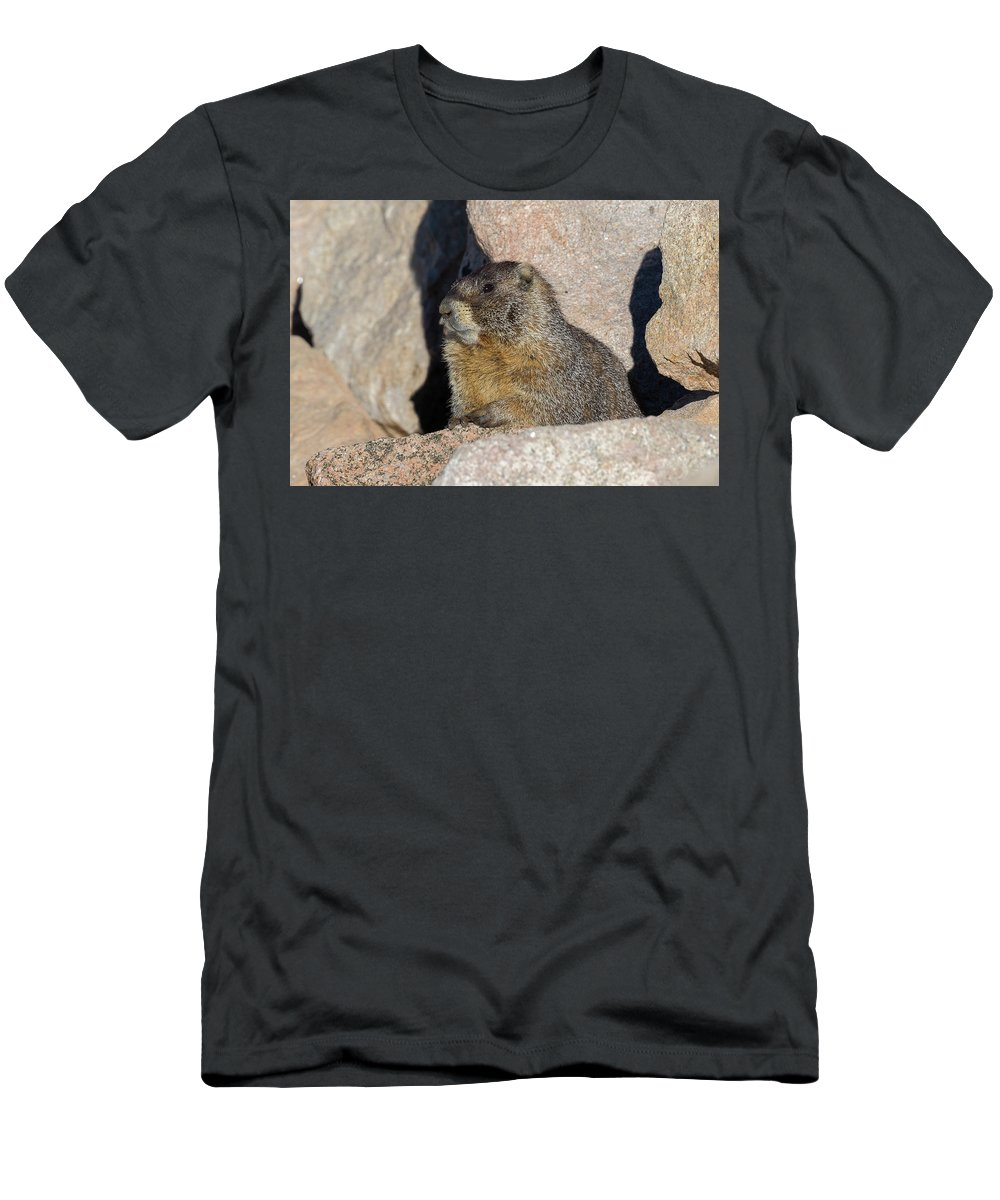 Marmot Men's T-Shirt (Athletic Fit) featuring the photograph Yellow-bellied Marmot Poses For Pictures by Tony Hake
