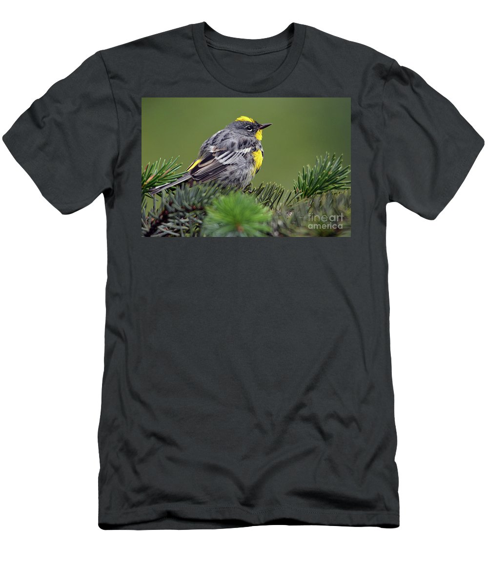 Deanna Cagle Men's T-Shirt (Athletic Fit) featuring the photograph Yellow-rumped Warbler by Deanna Cagle