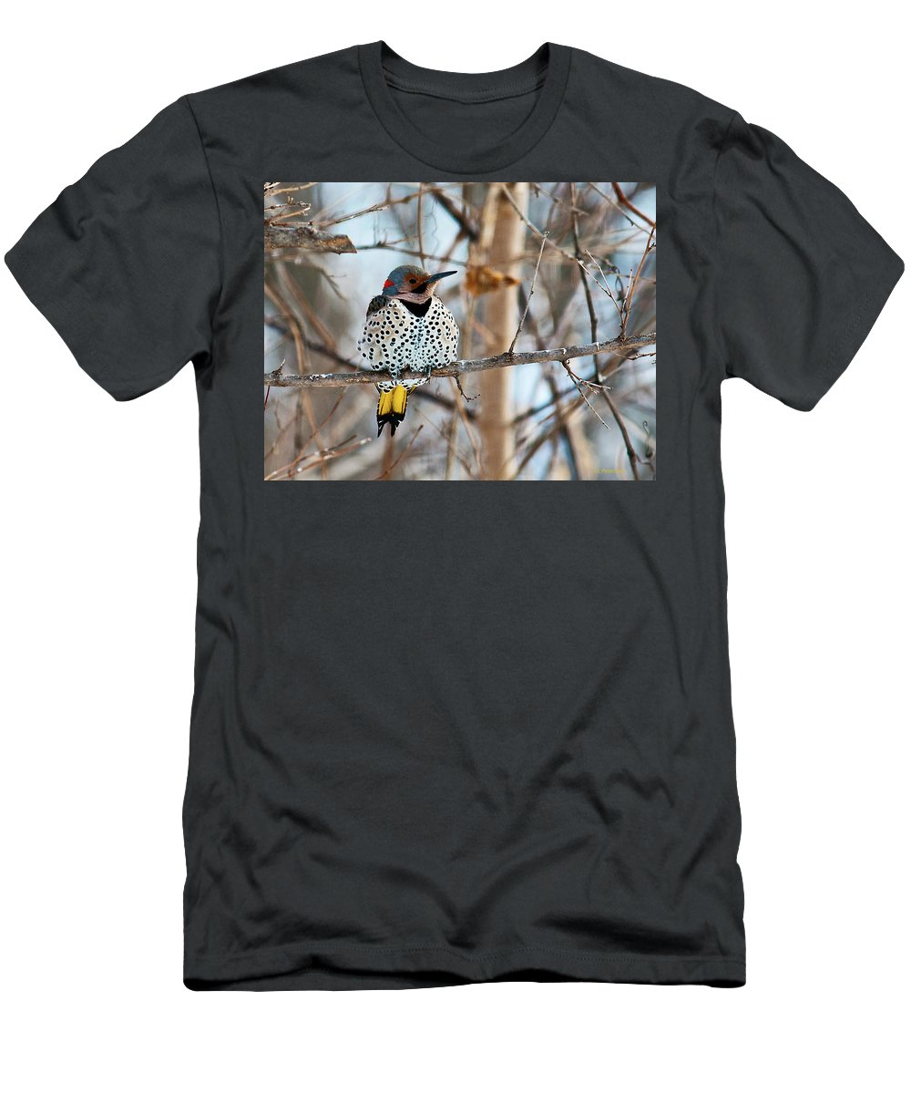 Yellow Shafted Northern Flicker Men's T-Shirt (Athletic Fit) featuring the photograph Yellow-shafted Northern Flicker Staying Warm by Edward Peterson