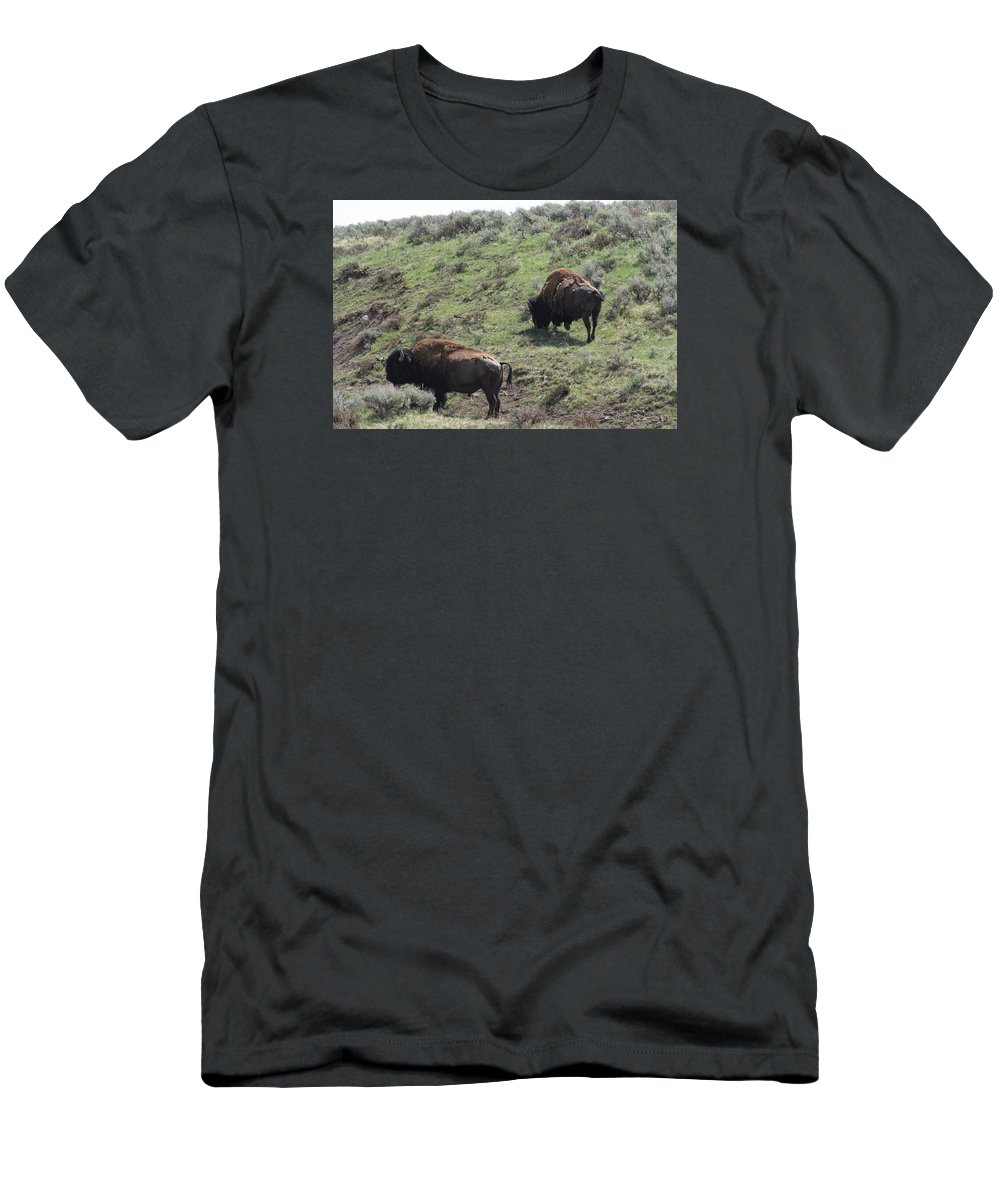 Wildlife Men's T-Shirt (Athletic Fit) featuring the photograph Yellowstone Bison by Anita Troy