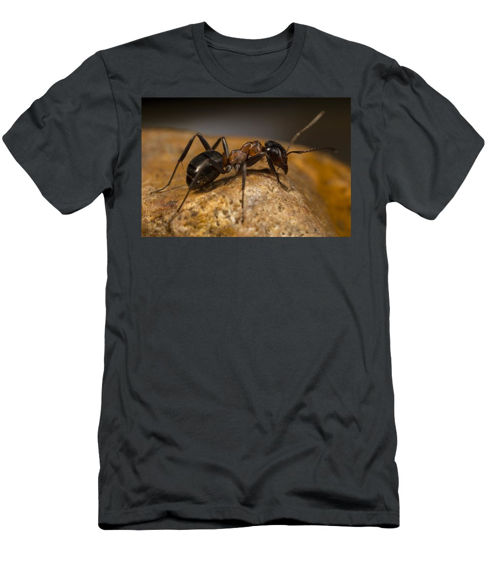 Ant Men's T-Shirt (Athletic Fit) featuring the photograph You Lookin' At Me? by Terry Leasa