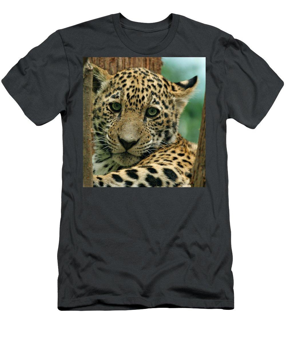 Jaguar Men's T-Shirt (Athletic Fit) featuring the photograph Young Jaguar by Sandy Keeton