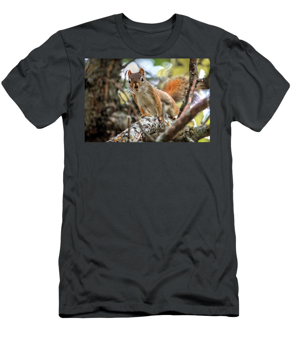 Autumn Fall Colours Colors Winter Red Yellow Red Orange Blue Harvest Evening The End Over This Before Winter Awakening Fall Colours Fall Color Summers End Pumpkins Halloween Leaves Gourds Fall Avenue Men's T-Shirt (Athletic Fit) featuring the photograph Hello by David Matthews