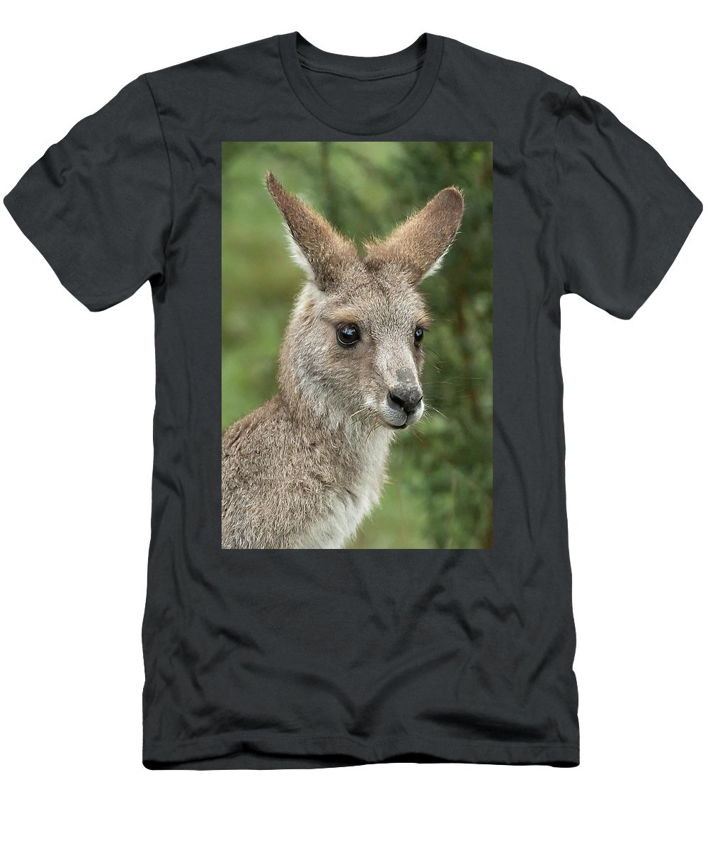 Kangaroo Men's T-Shirt (Athletic Fit) featuring the photograph Kangaroo Up Close by Barry Kearney