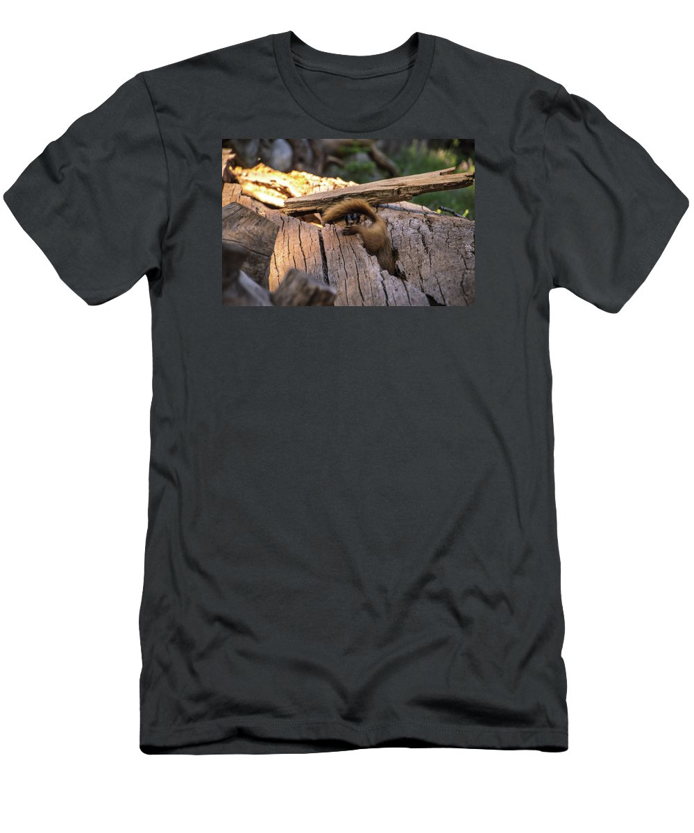Marmot T-Shirt featuring the photograph Marmot Escape by Carly Creley