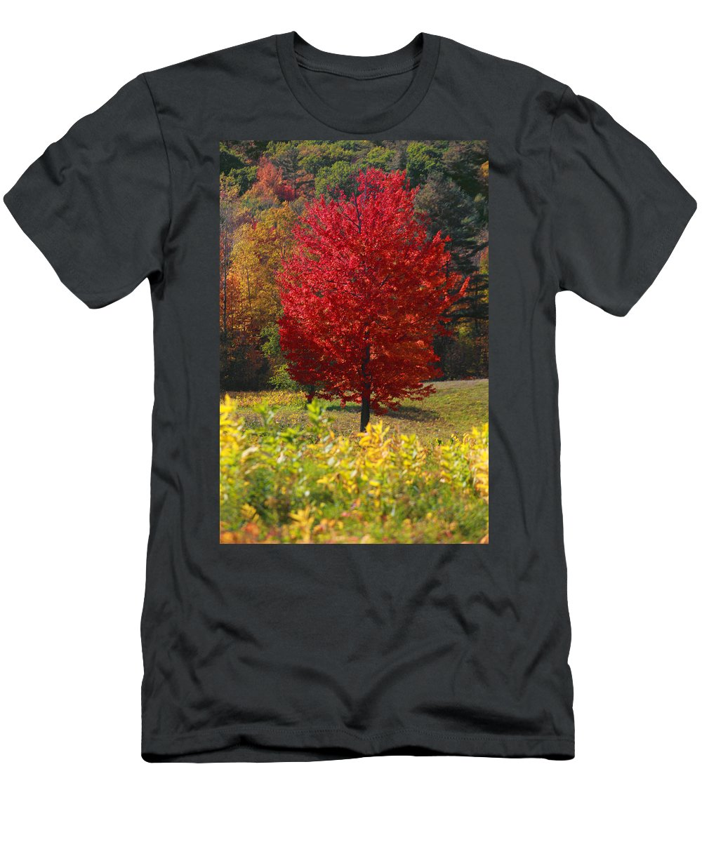 Red Maple Tree T-Shirt featuring the photograph Red Maple Tree by Trevor Slauenwhite