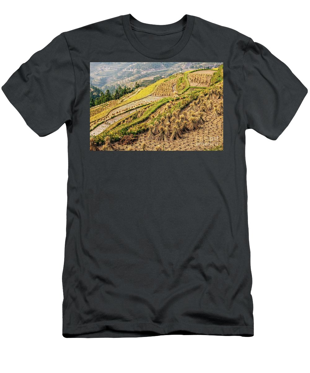Rice Men's T-Shirt (Athletic Fit) featuring the photograph Rice Terraces During Harvest by Delphimages Photo Creations