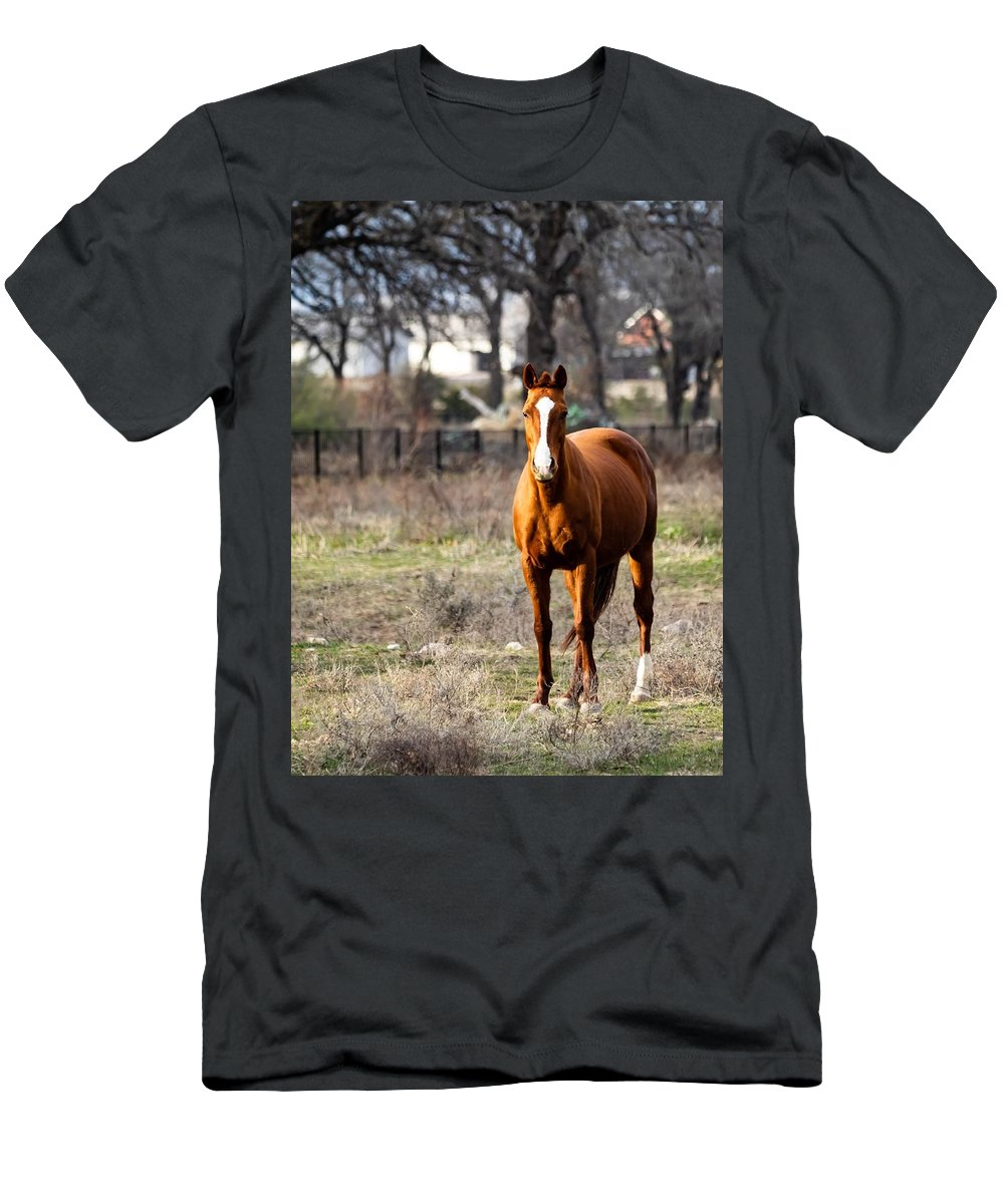 Horse T-Shirt featuring the photograph Bay Horse 3 by C Winslow Shafer