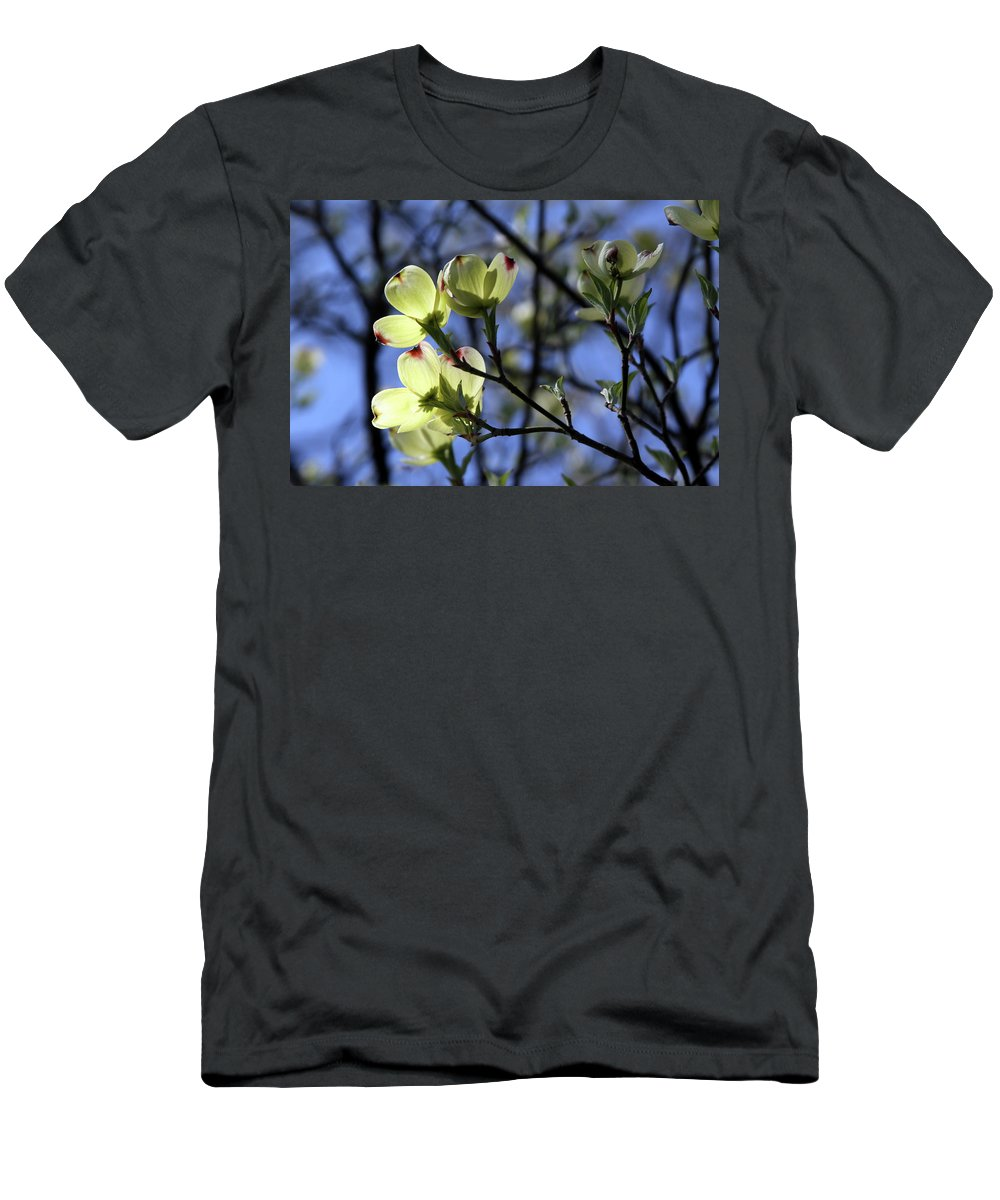 Dogwood Tree T-Shirt featuring the photograph Dogwood in Sunlight by John Lautermilch