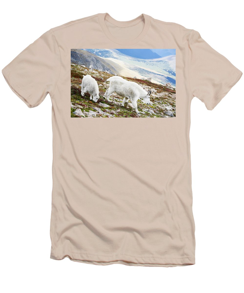 Mountain Men's T-Shirt (Athletic Fit) featuring the photograph Mountain Goats 1 by Marilyn Hunt