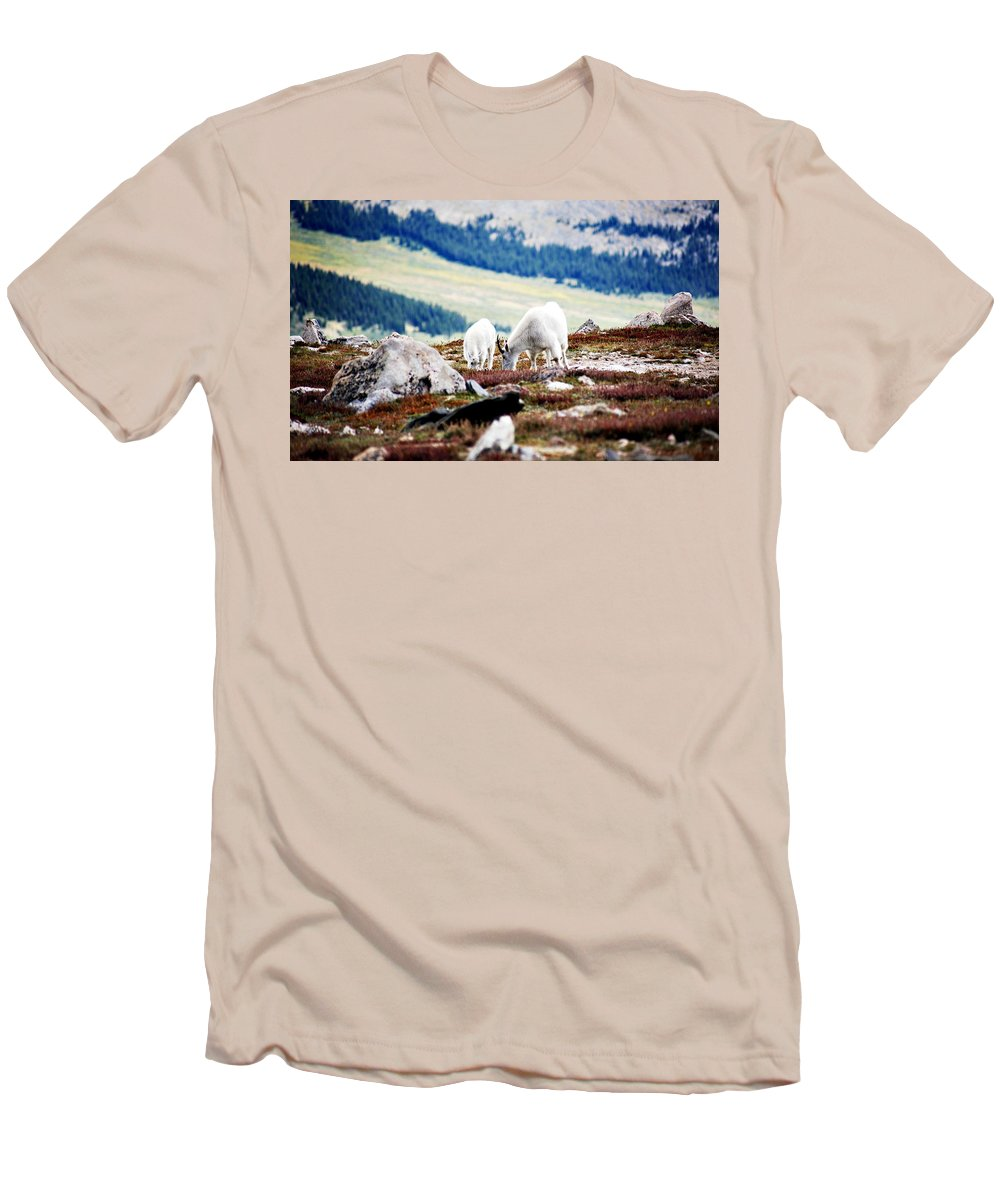 Animal Men's T-Shirt (Athletic Fit) featuring the photograph Mountain Goats 2 by Marilyn Hunt