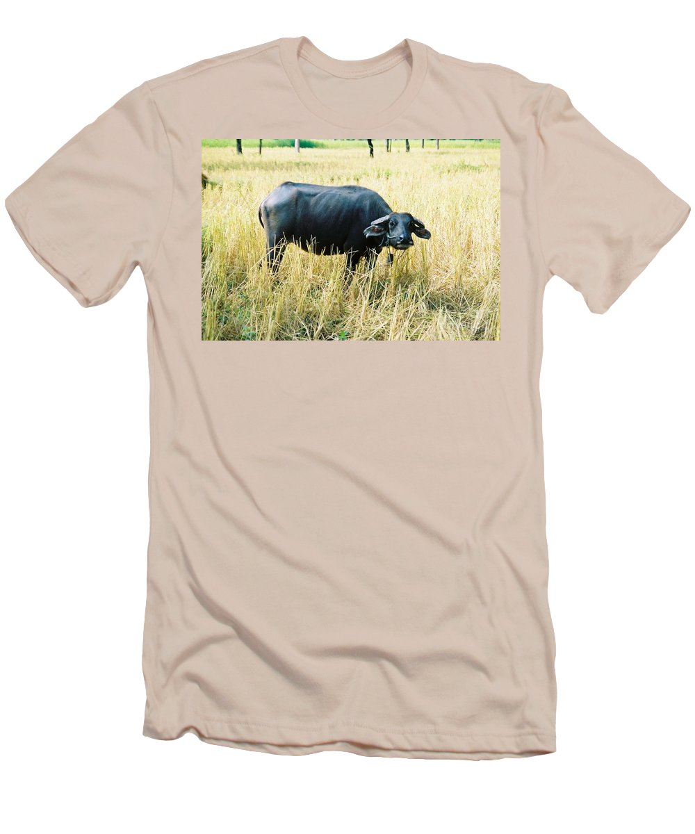 Water Buffalo Men's T-Shirt (Athletic Fit) featuring the photograph You Lookin At Me by Mary Rogers